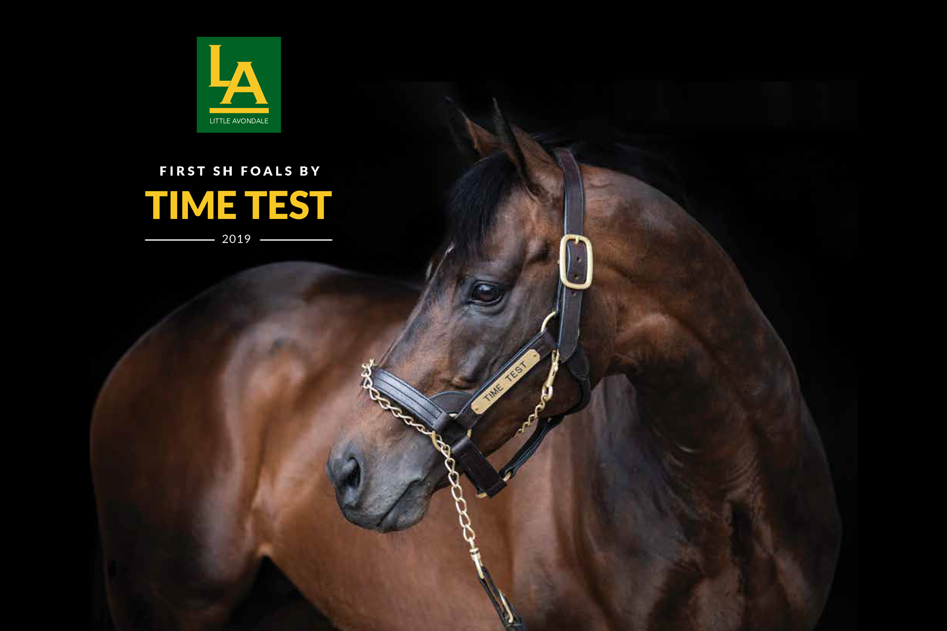TIME TEST FOAL BOOK
